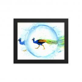 Peacock – Framed Art Print