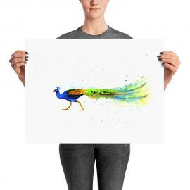 Colorful Peacock Art Print