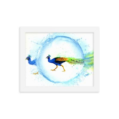 Peacock Water Droplet – Framed poster – Watercolor – Art Print