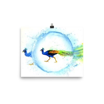 Peacock Water Drop Art Poster – Watercolor – Poster – Print