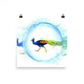 Peacock Water Drop Artwork  – Art Print